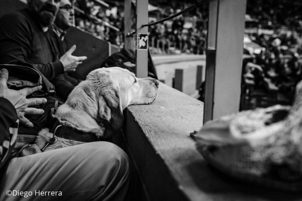 Stellar observa el partido desde la grada / Diego Herrera