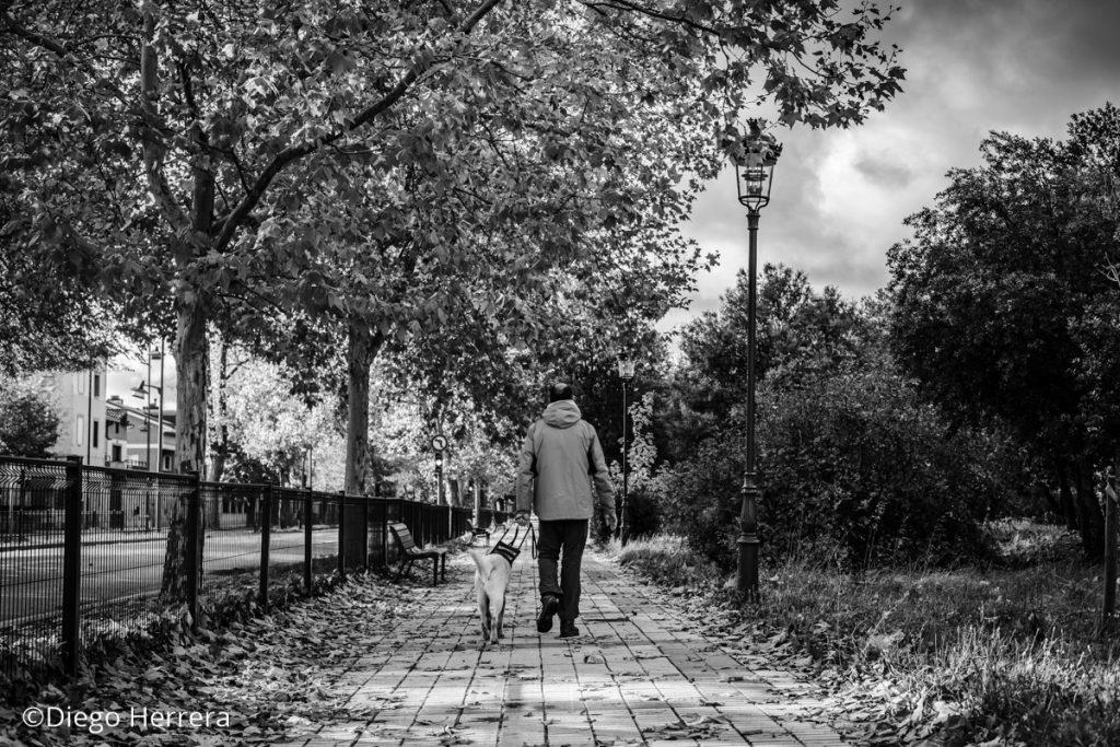 Roberto camina junto a Stellar por el paseo de la Quinta / Diego Herrera